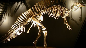 Museum of Natural History Venice :: book here!