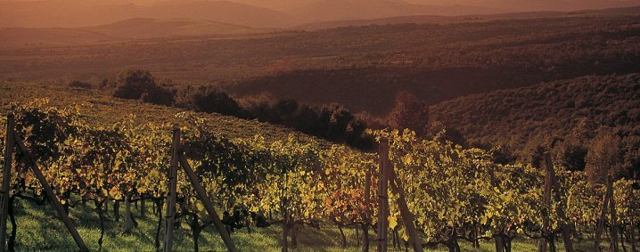 Tuscany wine tours :: Val d'Orcia